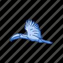 animal, bird, giant toucan, passerine bird, toco toucan, toucan icon