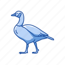 animal, beak, bird, canada goose, feather, goose, waterfowl icon