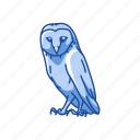 animal, bird, nocturnal, owl, talons, western barn owl