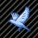 animal, bird, bluebird, eastern bluebird, flying creature, vertebrates