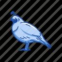 animal, beak, bird, plume, quail, valley quail icon