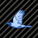 animal, baltimore oriole, bird, orche oriole, passerine bird icon