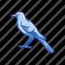 animal, bird, feather, flying creature, mimic bird, passerine bird, vertebrates