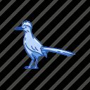 animal, bird, chaparral cock, cock, flying creature, roadrunner, roadrunner bird