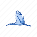 animal, bird, crane, feather, gruidae, whooping crane, wings