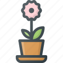 borthday, celebration, flower, gift, present icon