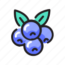 berry, blueberries, blueberry, fruits icon