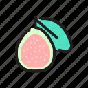 food, fruit, guava, organic