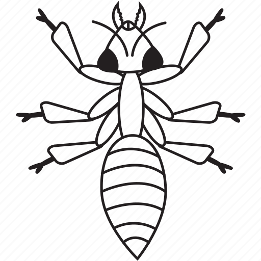 ant, art, bug, bugs, bw, graphic, insect icon