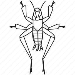 art, bug, bugs, bw, cricket, graphic, insect icon