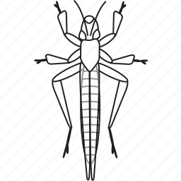 art, bug, bugs, bw, graphic, grasshoper, insect icon