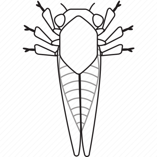 art, bug, bugs, bw, cicada, graphic, insect icon