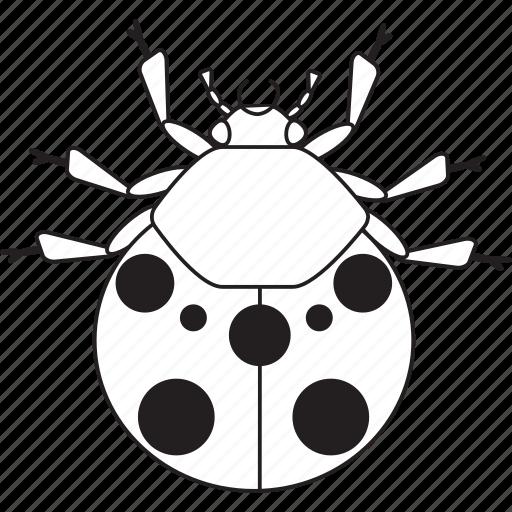 art, bug, bugs, bw, graphic, insect, ladybug icon