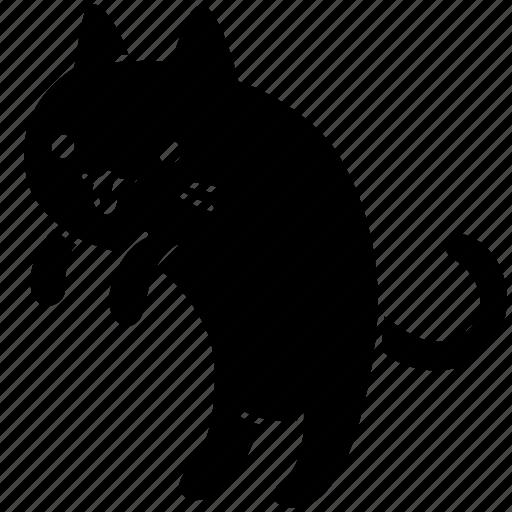 animal, cat, feline, meow, pet, trick, walk icon