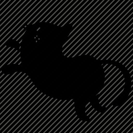 animal, cat, cute, feline, jump, meow, pet icon