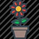 flowerpot, pot, flower, garden, nature