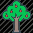 fruits, nature, plants, tree, wood