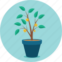 growing, growth, money, money plant, mutual funds, plant
