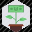 grow, money, plant, banking, flower, green, nature
