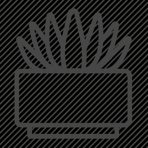 botany, cactaceae, cactus, plant, succulent, tropical icon