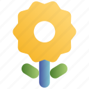 camera, floral, flower, photo, plant