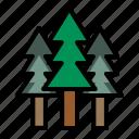 forest, joshuatree, landscape, tree, nature