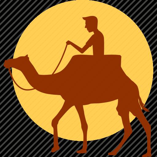 animal, camel, desert, horse, ride, riding, wild icon