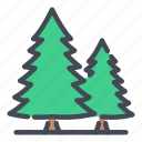 christmas, ecology, forest, green, nature, pine, tree
