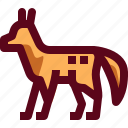animal, canada, dog, fox, lifewild, red, wild