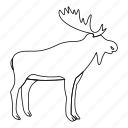animal, antler, deer, line, moose, outline, thin icon