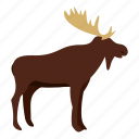 animal, antler, deer, mammal, moose, nature, wildlife icon