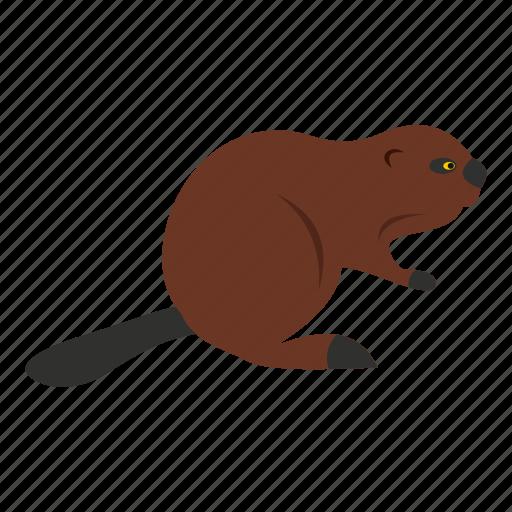 animal, beaver, canada, canadian, fur, nature, wildlife icon