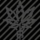 cannabidiol, cannabis, cbd, marijuana, medical, natural, pharmacy icon