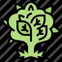 cannabis, flower, grow, herb, marijuana