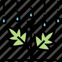 agriculture, cannabis, cultivation, grow, plant