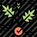 cannabis, diagram, herb, leaf, plant