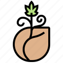 agriculture, cannabis, grow, nature, seeds