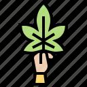 cannabis, herb, leaf, natural, weed