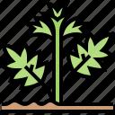 hemp, herb, leaf, natural, plant