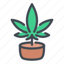 cannabis, marijuana, weed, hemp, grow, pot, plant