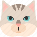 animal, breed, british, burmilla, cat, pet, purebred icon
