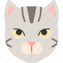 american shorthair, animal, cat, kitten, pet, purebred icon
