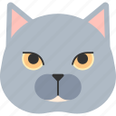 animal, bristish shorthair, cat, kitten, kitty, pet, shorthair icon