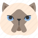 american, animal, breed, british, cat, himalayan, pet icon