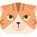 animal, breed, cat, pet, purebred, scottish icon