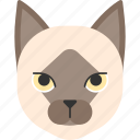 animal, breed, burma, burmese, cat, pet icon
