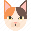animal, breed, fluffy, japanese, japanese bobtail, pet, purebred icon