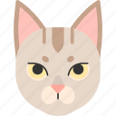 animal, breed, cat, pet, purebred, singapore, singapura icon