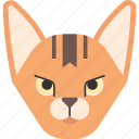 abyssinian, animal, breed, cat, kitten, pet, purebred icon