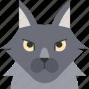 animal, breed, cat, norwegian, norwegien forest, pet
